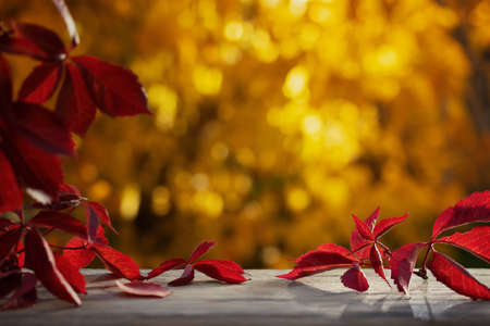 Beautiful natural autumn background with colorful leaves on a wooden table and blurred trees in the park. Blank for design, postcards or advertising