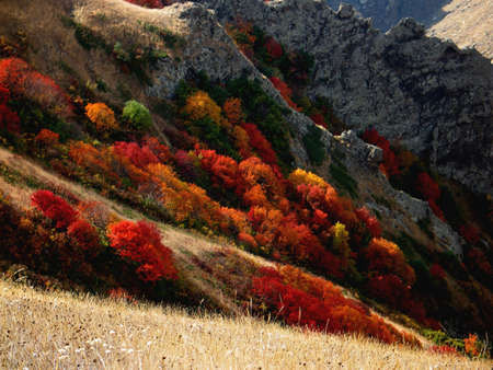 vivid autumn colors photo
