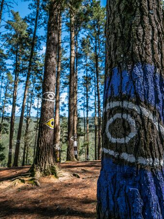 oma: Eyes on the trees, Oma forest