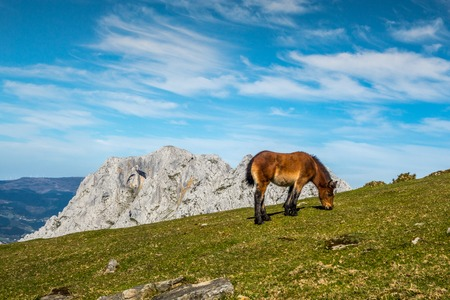 basque country: Young pony pasturing in the mountains, Basque Country Stock Photo