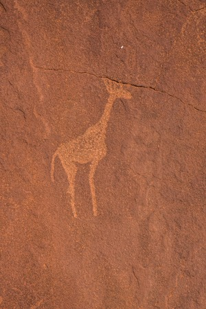 archeological: Sandstone engravings in a stone at Twyfelfontein, Namibia
