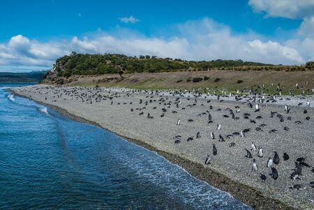 Penguins in Martillo island in Ushuaia, Argentina