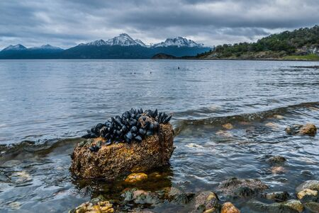 tierra: A bed of mussels in Ensenada bay in Ushuaia, Argentina