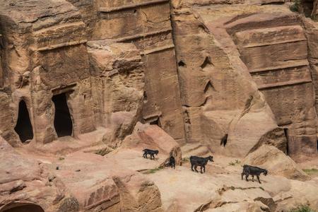 Goats near facade carvings in the stone in Petra, Jordan 版權商用圖片