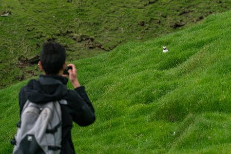 Unidentified tourist taking a photo to a puffin in Mykines, Faroe Islands