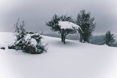 Snow over a tree on winter field under the clouds, Spain Standard-Bild