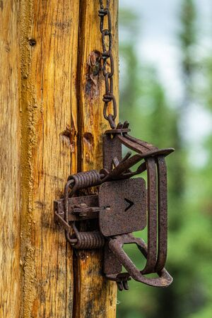Old and rusty hunting trap hanging on a wall, Alaska Stock Photo