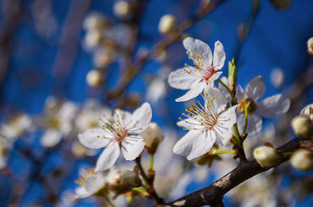 flowers sun: Spring branch is on a tree in a beautiful sunny day outdoors Stock Photo