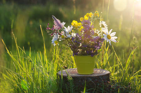 Bouquet of wild flowers of different colors in the vase outdoors or growing on field Stock Photo
