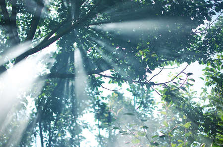 Dramatic: The rays of the sun permeate through the branches of the trees with leaves on the summer day