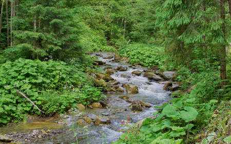 A stream in the mountains flows along the rocks and a stormy waterfall in the summer