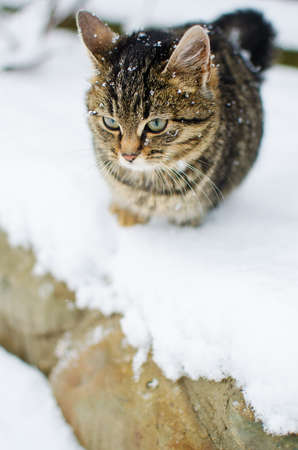A little cat walks in the fresh air and snow falls