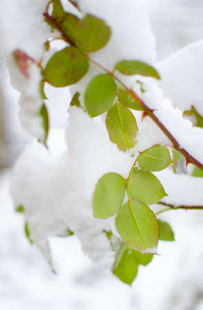 White fluffy snow covered plants in the fresh air