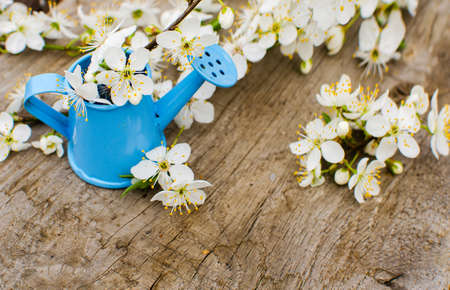 Little watering pot with water and flowers on background Imagens