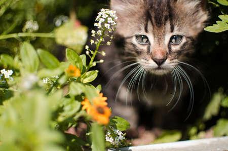 Funny little cat walking outdoors near home