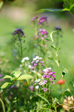 Fresh wildflowers bloom on the field on a beautiful sunny summer day for a bouquet Stock fotó - 150295944