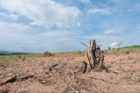 deforested: tree stump in deforested mountain hill.