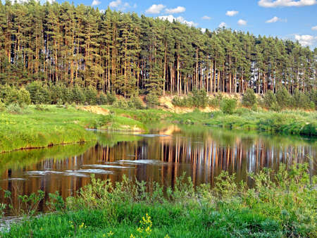 Pine Forest on the Medveditsa River