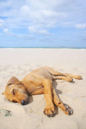 Dog Sleeping On The Beach photo