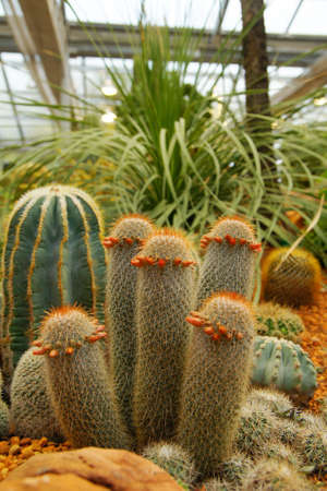 Group of Cactus                   photo