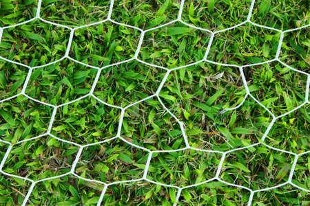 goalline:  football background. Seamless pattern.