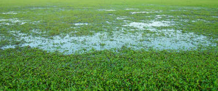 goalline:  Close-up image of fresh spring green grass                  Editorial