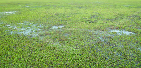 Close-up image of fresh spring green grass                Stock Photo - 11829078