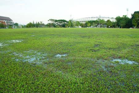 goalline: Close-up image of fresh spring green grass