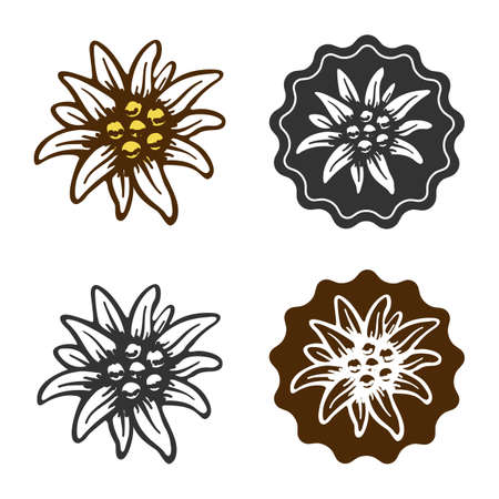 edelweiss flower symbol alpinism alps germany logo Vector
