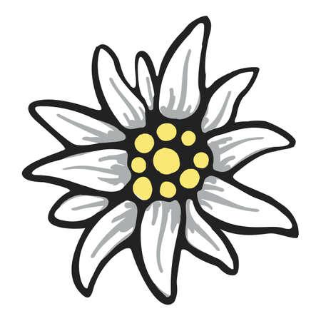 fleurs des champs: edelweiss, fleur, symbole, alpinisme, alpes, allemagne, ensemble, logo Illustration