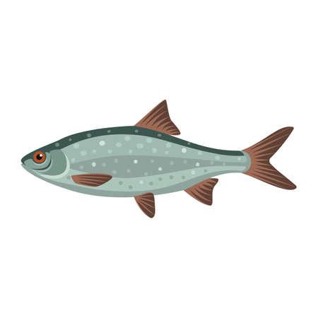 Common roach rutilus fish
