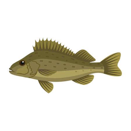 Ruffe pope eurasian fish Stock Photo
