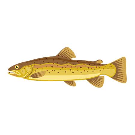 Hucho taimen siberian salmon fish