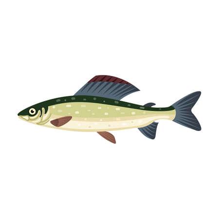 Grayling salmon thymallus fish Stock Photo