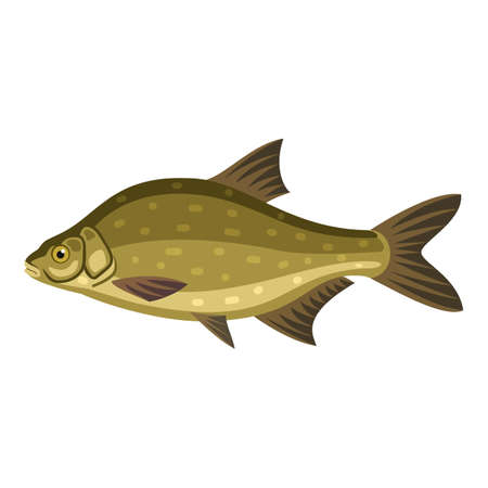 common carp: Common bream, freshwater, bronze carp breamfish