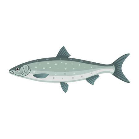 Felchen Maräne Lavaret Meeresbiologie Fische Standard-Bild - 69673967