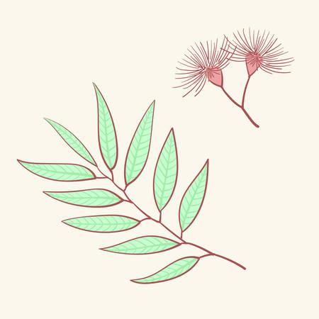 Eucalyptus, blue agonis thyme asparagus set Ilustração