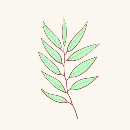 Eucalyptus, blue agonis thyme asparagus set Stock Illustratie