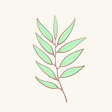Eucalyptus, blue agonis thyme asparagus set Illustration