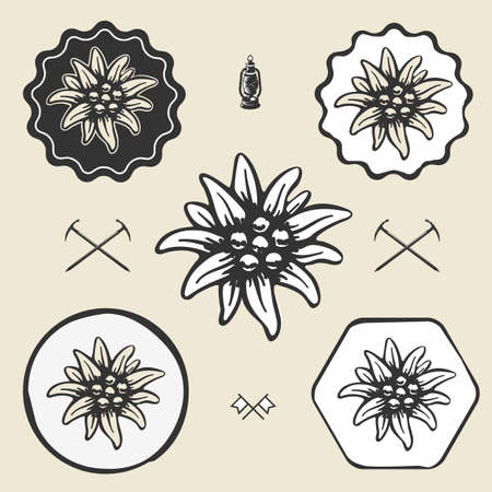 edelweiss flower alpinism vintage icon flat web sign symbol label