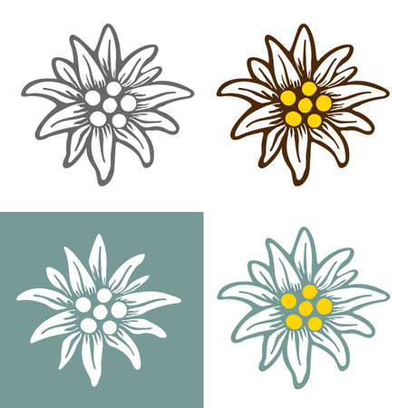 edelweiss flower icon vector alpine icon flat web sign symbol label