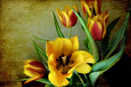 a bunch of red and yellow tulips on a grunge background photo