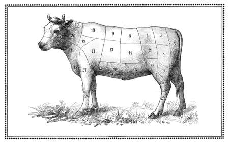 An old beef chart with numbered cuts My elaboration from an engravings of  Sueddeutsche Kueche  by Katharina Prato  - Verlagbuchhandlung Styria, 1913, author unidentified  photo