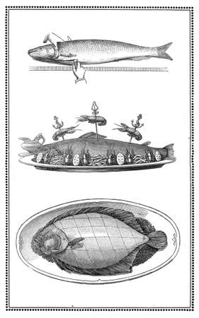 elaboration: Engravings of fish and fish dishes  preparation and table presentations  My elaboration from engravings of  Sueddeutsche Kueche  by Katharina Prato  - Verlagbuchhandlung Styria, 1913, author unidentified