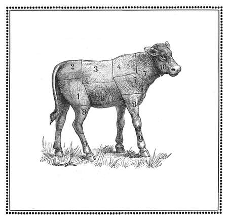An old calf  chart with numbered cuts  My elaboration from an engravings of  Sueddeutsche Kueche  by Katharina Prato  - Verlagbuchhandlung Styria, 1913, author unidentified  photo