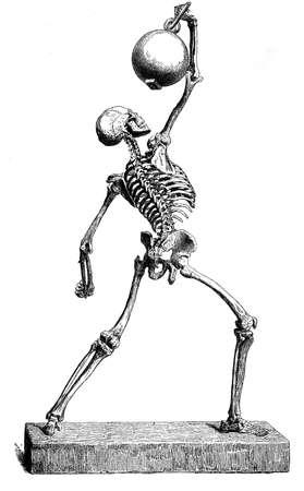 human bones: Anatomy  human bones structure