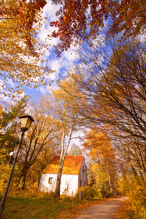 lonely house on autumnal path among trees, wide angle photo