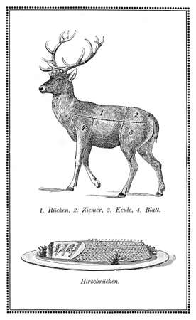 wild venison: Old deer chart  with numbered cuts