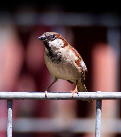 balustrade: small sparrow standing on iron balustrade