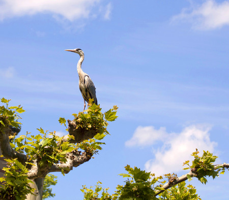 Stork nesting over a tree top photo